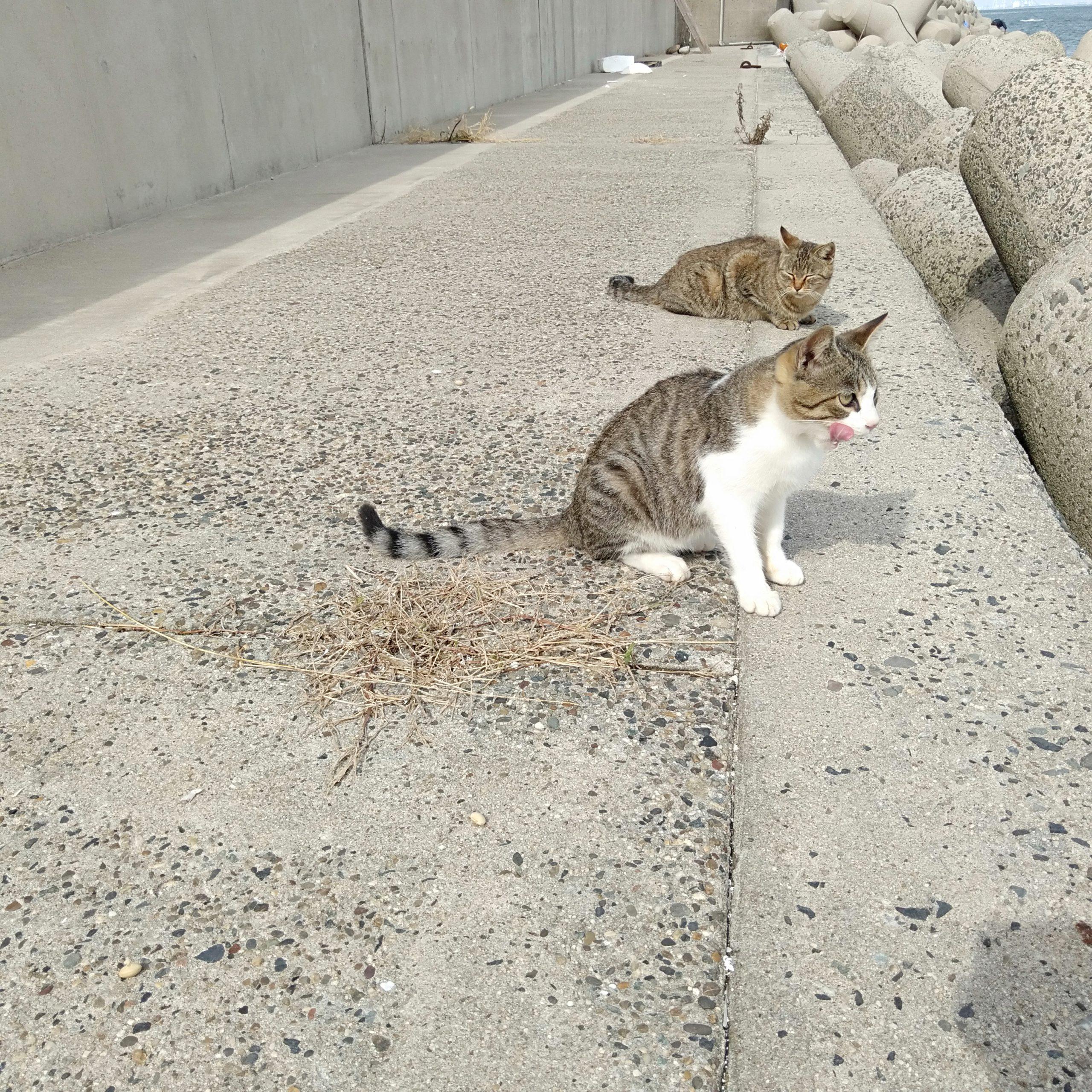 日間賀島-猫-0917
